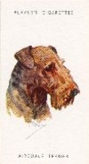 Airedale_