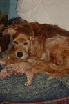 Exhausted_bailey_aug_05
